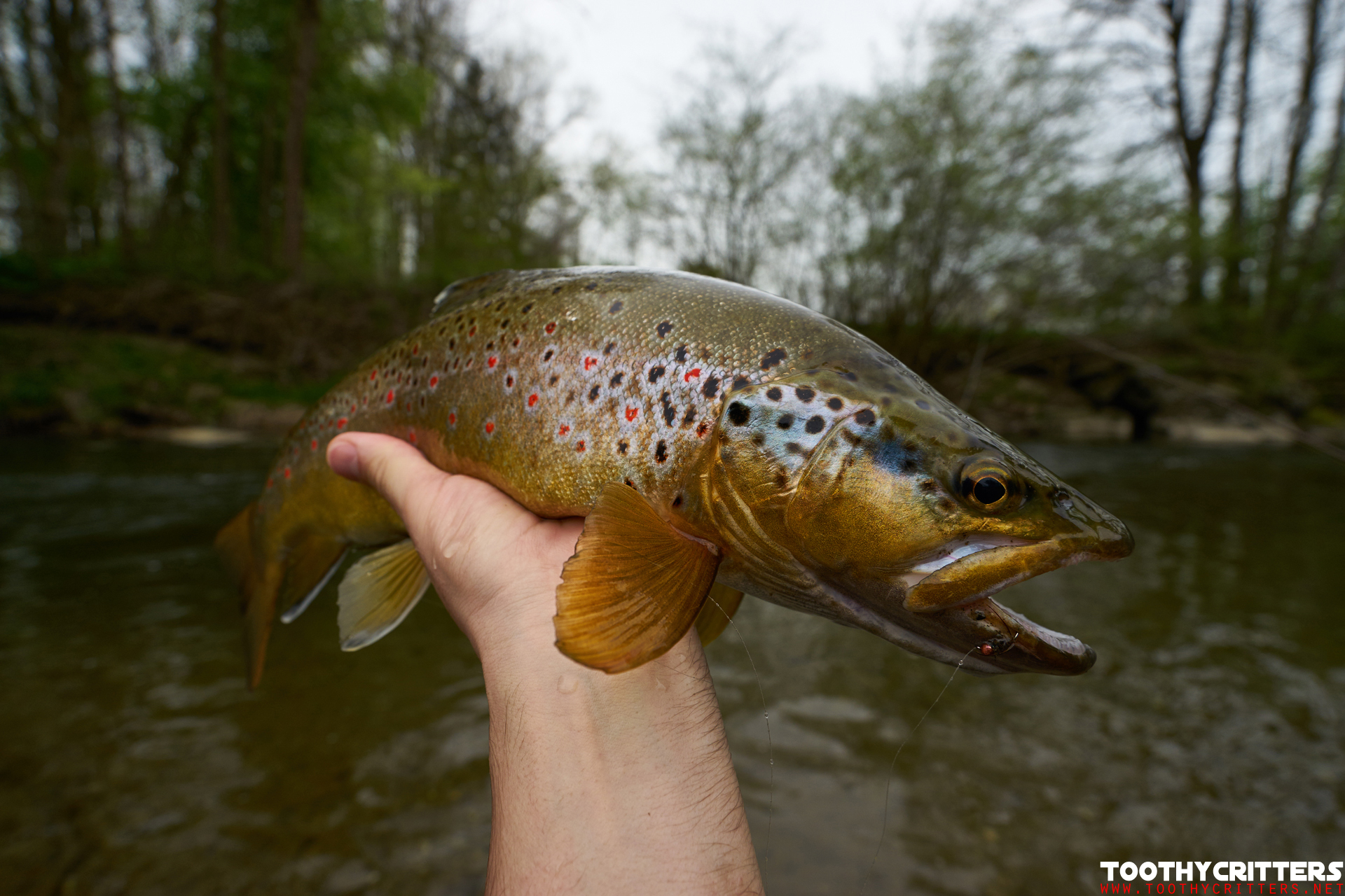 Trout Fly Fishing