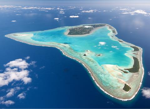 ToothyCritters Aitutaki1