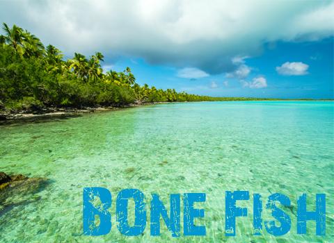 ToothyCritters Aitutaki Bone Fish
