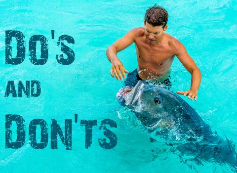 ToothyCritters Aitutaki Dos and Donts