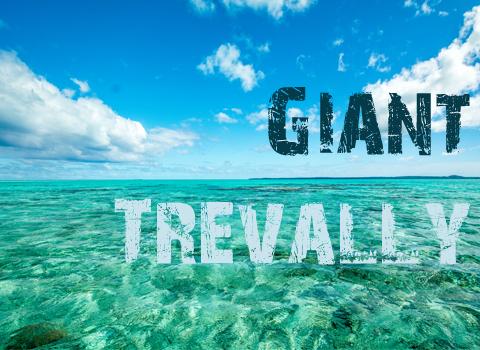 ToothyCritters Aitutaki Giant Trevally