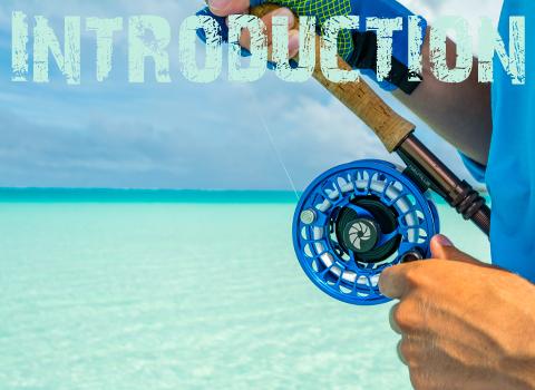 ToothyCritters Aitutaki Introduction