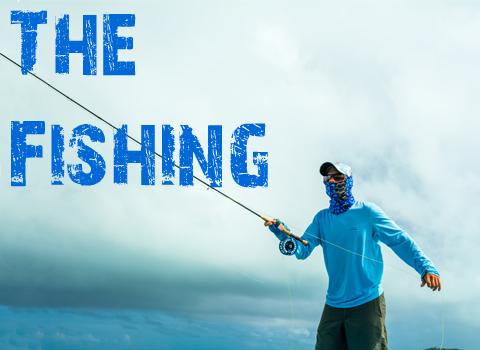 ToothyCritters Aitutaki The Fishing