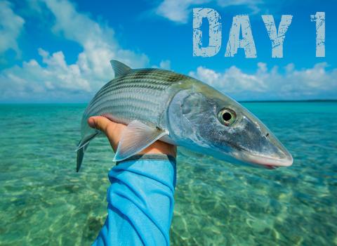 ToothyCritters Aitutaki Day1 480x350