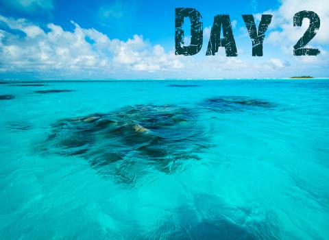 ToothyCritters Aitutaki Day2 480x350