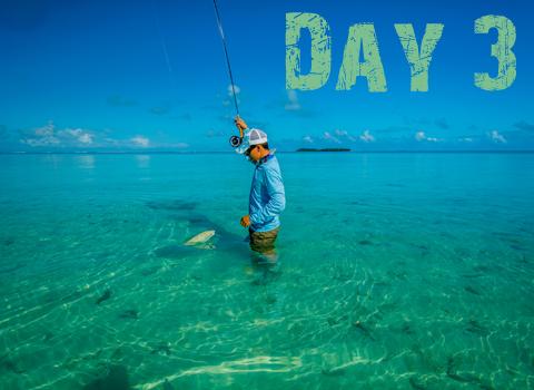 ToothyCritters Aitutaki Day3 480x350