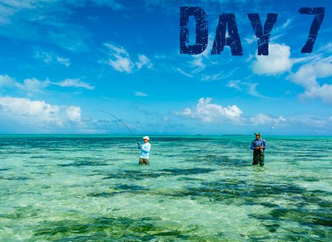 ToothyCritters Aitutaki Day7 480x350
