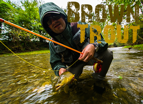 ToothyCritters Trout Days 20140921