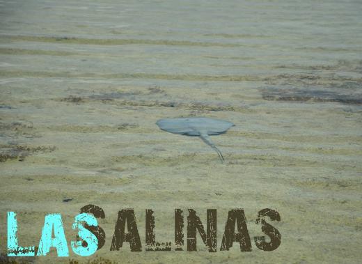 ToothyCritters Cuba Las Salinas