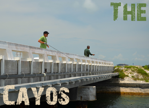 ToothyCritters Cuba The Cayos
