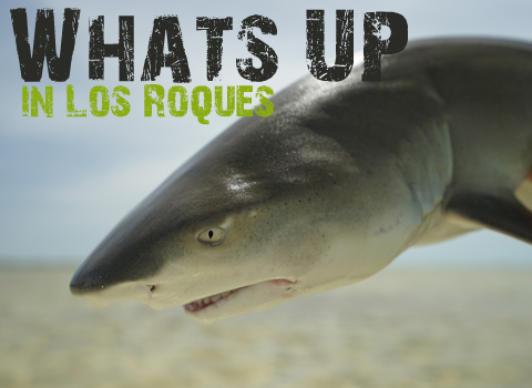 ToothyCritters LosRoques Preview