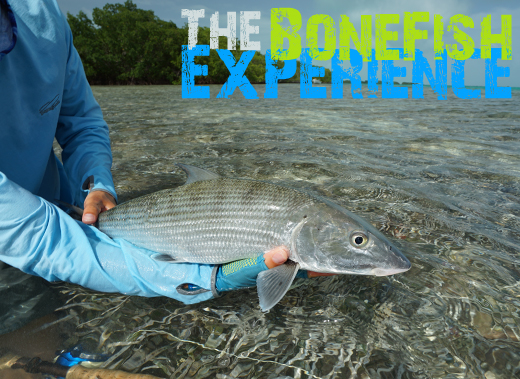 ToothyCritters LosRoques The Bonefish Experience