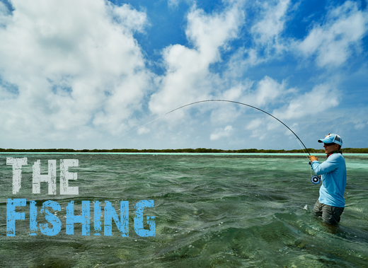 ToothyCritters LosRoques The Fishing