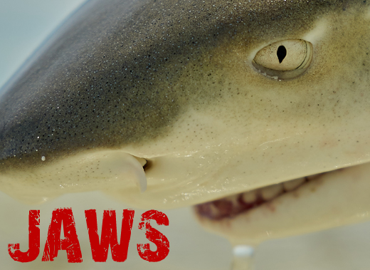ToothyCritters LosRoques Jaws