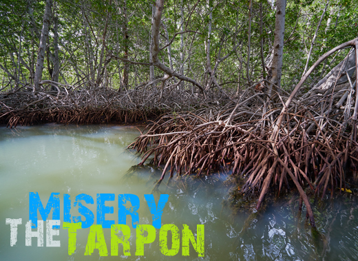 ToothyCritters LosRoques The Tarpon Misery