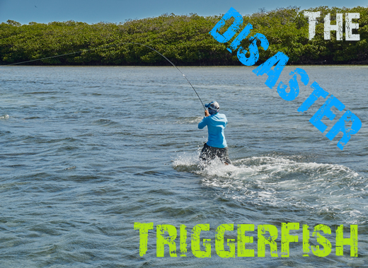 ToothyCritters LosRoques The Trigger fish disaster