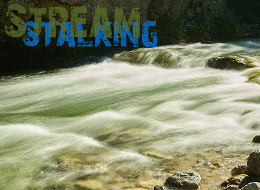 ToothyCritters Trout Stream stalking