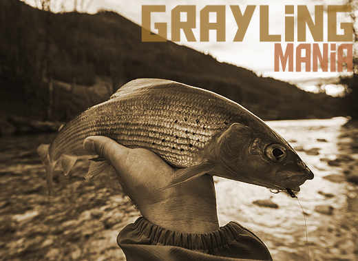 ToothyCritters Trout Grayling mania