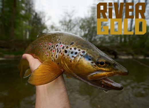 ToothyCritters River gold