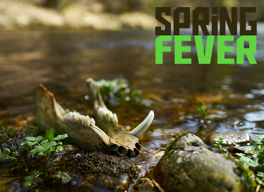 ToothyCritters Spring fever